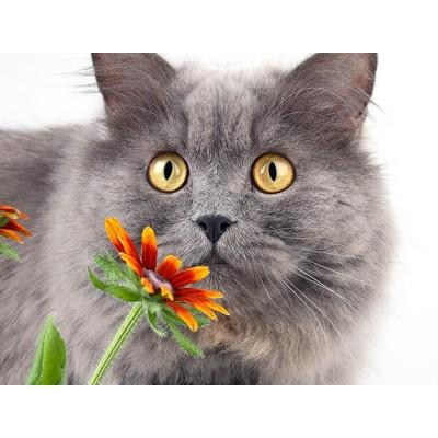 Симптомы аллергии у кота, нужно ли укол коту от аллергии?