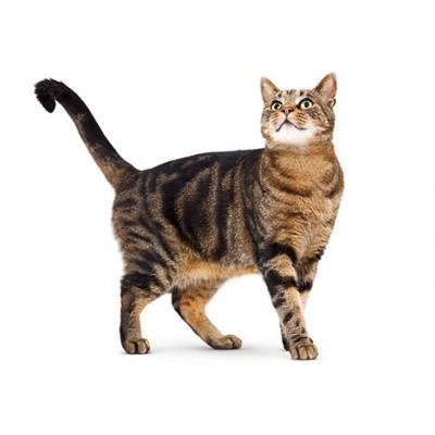 Как кормить кастрированного кота? Что нельзя давать кастрированным котам?