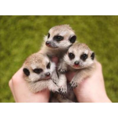 Полезный зоопортал для ответственных владельцев животных
